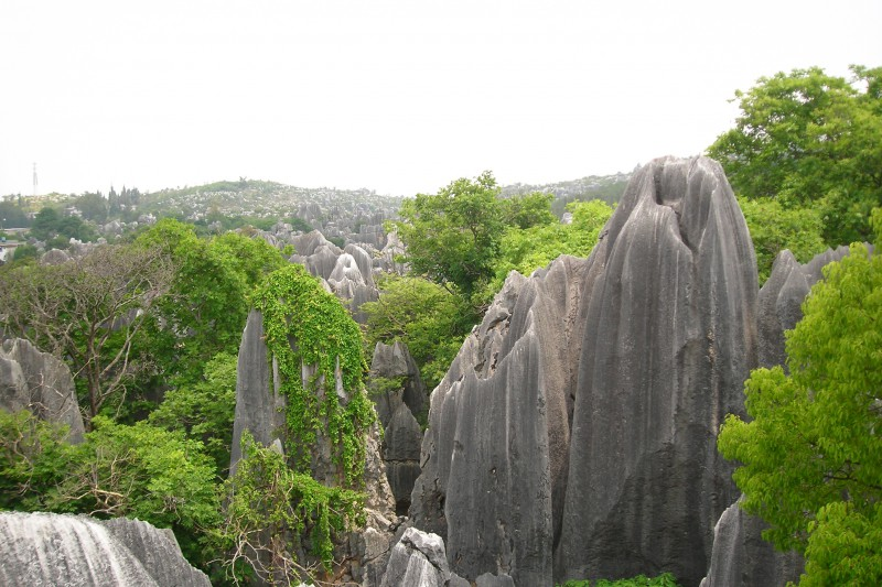 stone-forest-2.jpg