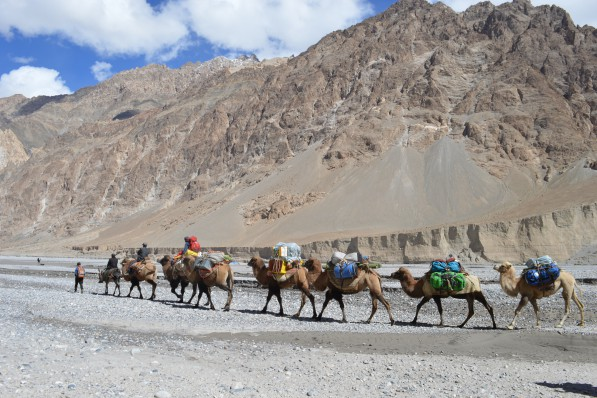 camel-caravaans-on-the-way-to-k2-1.jpg